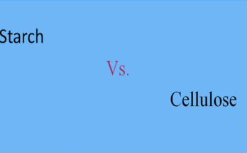 Functional Differences between Starch and Cellulose